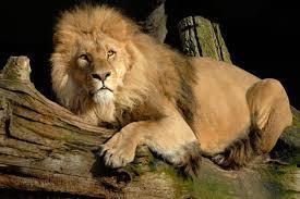 un-lion.jpg